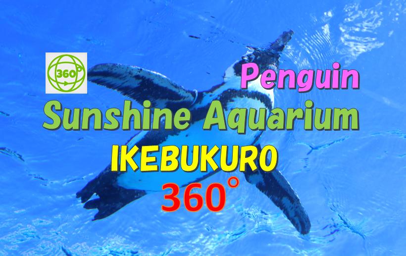 sunshine aquarium penguin