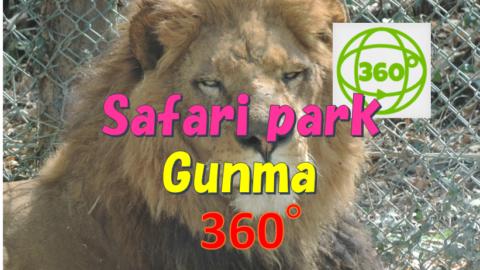 lion in Gunma safari park